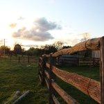fence sunset