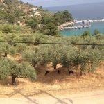 Photo of Dionysos