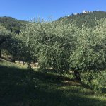Photo de Agriturismo La Fonte