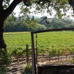 A wooden swing overlooks a vineyard on the grounds.