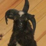 Three Horned Goat