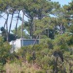 Maison construite parmi les pins