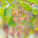 Yamanashi Fuehukigawa Fruit Park Foto