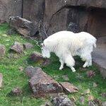 Foto di Oregon Zoo