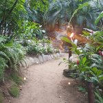 Foto de Vallarta Adventures