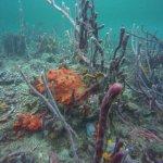 Los Corales