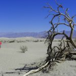 Photo of Mesquite Flat Sand Dunes