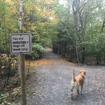 Great place to walk your dog off-leash! Great place to explore Dartmouth and Halifax!