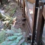 Foto de Redwood National Park