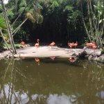 Flamingo Gardens Foto