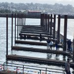 SeaLions just off Pier 39