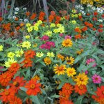 Pretty flowers at Reptile Garden