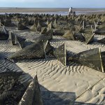 Skaket Beach Oyster Farms.  They have been there just over 5 years and growing.  The guys are re