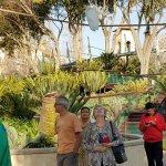Monte casino bird park Foto