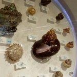 大连贝壳博物馆真的很不错,里面很多漂亮的贝壳,就在星海广场边上,而且可以买一些贝壳纪念品,几块钱的几十块钱的都有,可以随便挑。Very nice, a good shell museum!