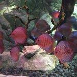 Coex Aquarium Foto