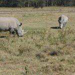 Big rhinos in Lake Nakuru