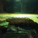 Aquarium du Perigord Noir Foto