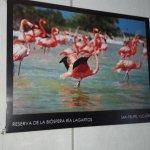HAY TOURS PARA VISITAR ESTA RESERVA DE FLAMINGOS