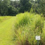 Native Plant beds and woodlot