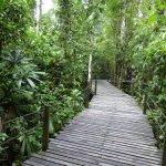 Abai Jungle Lodge-bild