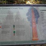 General Grant Tree Trail Foto