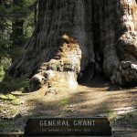 Photo of General Grant Tree Trail