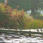 Ducks sunning themselves.
