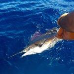 Foto de Pisces Sportfishing
