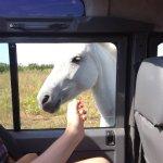 Un cheval qui vient chercher les caresses