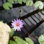 Photo of Centenary Lakes Botanic Gardens