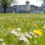 Spring in Dusseldorf