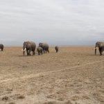 Porini Amboseli Camp Foto