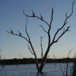 Bird-life while kayaking