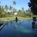 piscine vue des bungalows