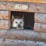 Foto de Denali Princess Wilderness Lodge