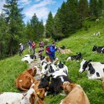 Trekking through the Dolomites