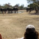 We were also fortunate to have elephants come to the water hole next to the lodge