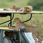 Tropical Cats Tours Foto
