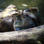 Augsburg Zoo Foto