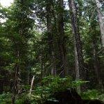 Giant Cedars Boardwalk Trail Foto
