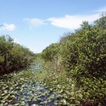 grass marshes and mangrove forests