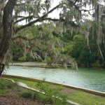 Salt Springs Recreation Area Foto