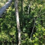 Foto de Flight of the Gibbon