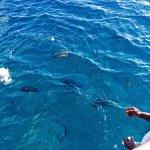 Fish feeding off Coongoola