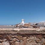 Stadtmauer von Essaouira Foto