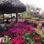 Photo de Flamingo Villas Club