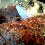 El menhir pescado fresco