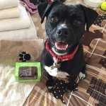 Daisy was very excited to get a treat box on arrival at the hotel and she loved the bed! :)
