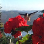 Hummingbird visit in the morning